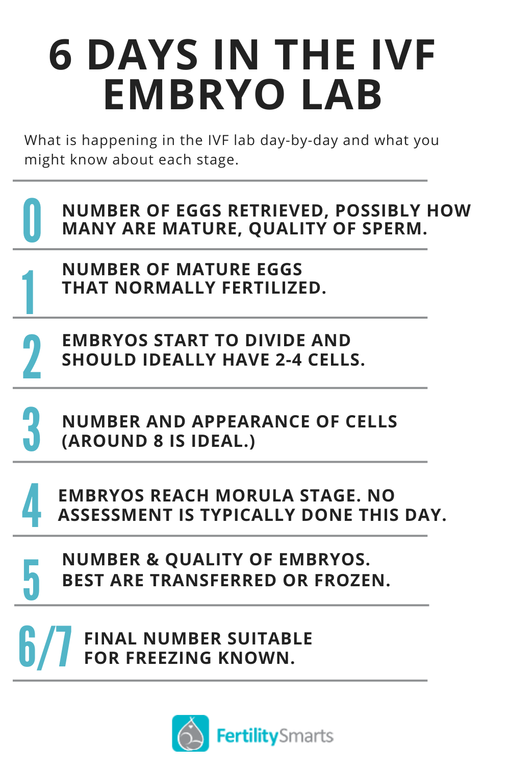 Timeline of how embryos develop in the IVF lab.