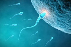 How long can sperm live in a woman's body after ejaculation?
