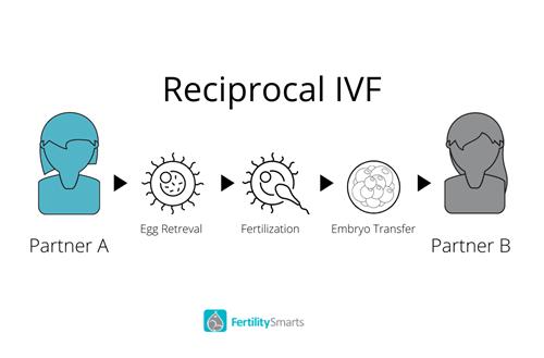 Reciprocal IVF Diagram
