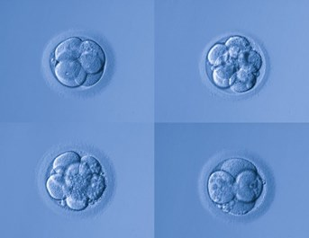 Embryo And Blastocyst Grading How Does It Work