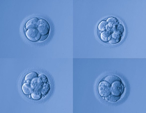 Embryo and Blastocyst Grading - How Does it Work?