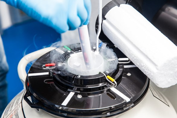 Embryo Freezing and Thawing: What You Need to Know