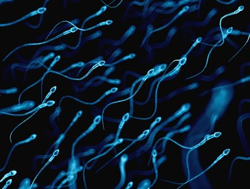How do I know if my partners sperm count is low?