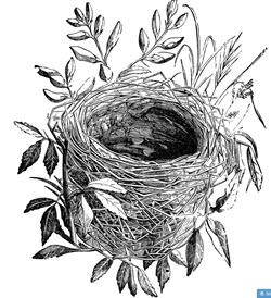 The Fertile Nest